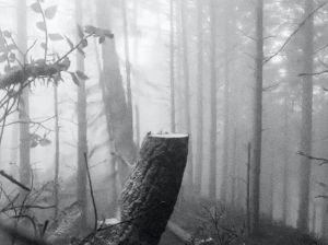 <p>© Julian Charrière - Ever Since We Crawled Out, 2018, Film Still (copyright the artist; VG Bild-Kunst, Bonn, Germany)</p>