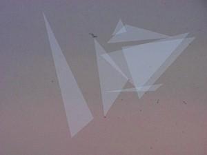 Kilian Rüthemann, Untitled (Birds), 2008, videostill — © Centre culturel suisse. Paris