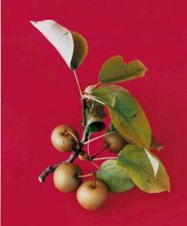 <p>Frucht (2007) Photo tirée de la série Flowers, Fruits & Portraits (C-print sur aluminium, dimensions variables) Copyright de l'artiste et Courtesy Gallery Bob van Orsouw (Zurich) et Salon 94 (NY)</p>